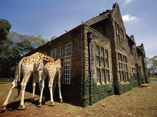 Giraffe Manor  / PATRICK CHAUVEL